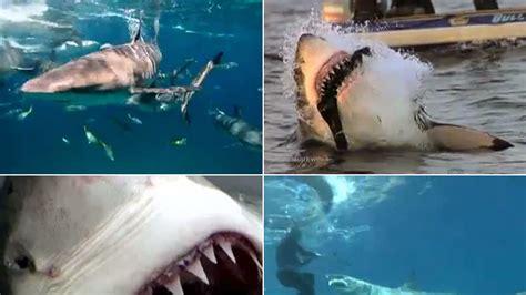 shark attacks related incidents shark attack survivors surfers seals and survivors top 9 shark attacks video