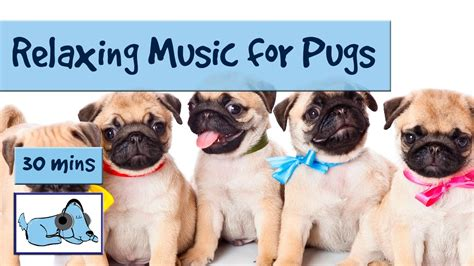pug breathing sound for pugs and pug puppies soothing for pugs calm pugs with breathing