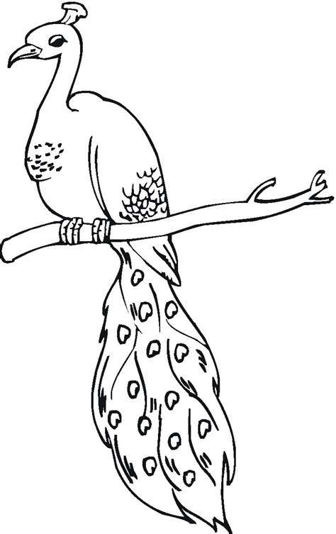 simple peacock coloring page peacock coloring sheet coloring pages