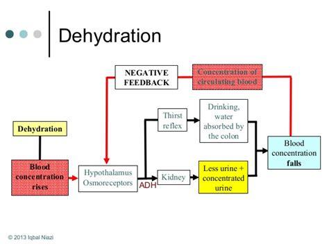 dehydration kidney osmoregulation