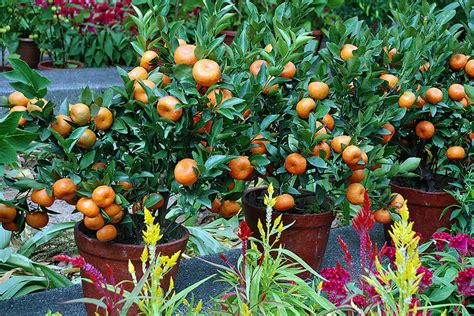 grow veggies fruit trees in containers limited space - Container Gardening Fruit Trees