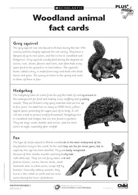 fact card template woodland animal fact cards primary ks1 teaching resource
