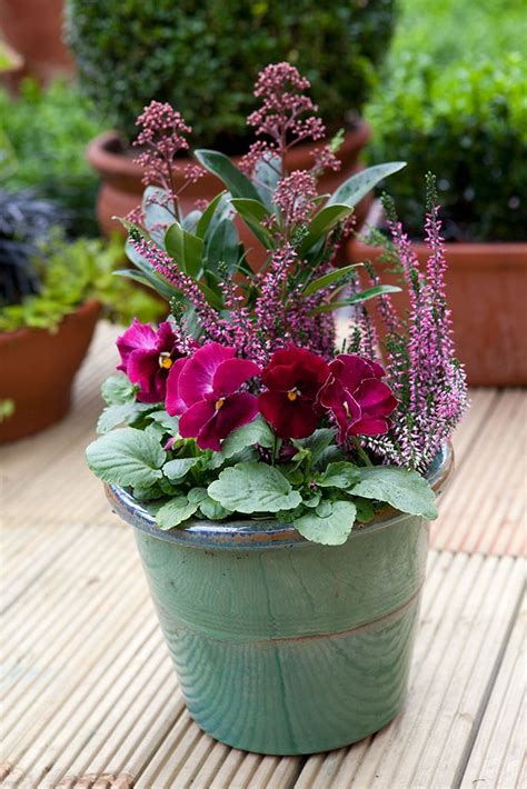 winter flowering shrubs for containers 17 best ideas about winter container gardening on