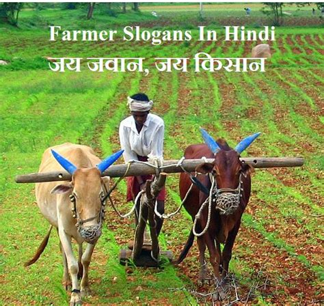 farmer slogans  hindi