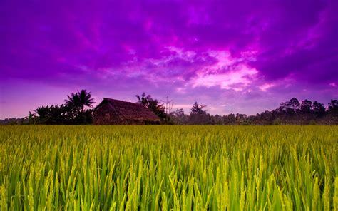 wallpaper of green fields green field background download hd desktop wallpapers