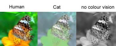 what colors can cats see cat
