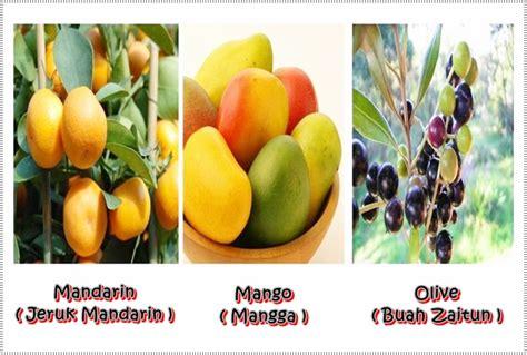 nama buah buahan dalam bahasa inggris beserta gambar dan artinya