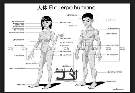 descargar e imprimir dibujos del cuerpo humano para colorear y pintar descargar e imprimir dibujos del cuerpo humano para