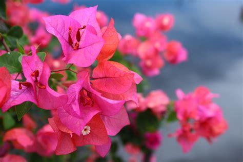 Bunga Plastik Hias Artificial Pot Pagar Kecil Mawar Fence Putih ini dia 10 daftar tanaman hias yang berbunga tanaman magz