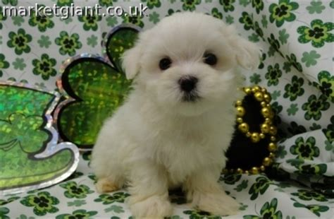 baby dogs for sale baby dogs for free dogs puppies for sale in breeds picture
