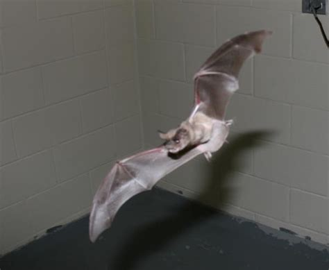 pittsburgh pa bat removal thewildlifeprofessionals