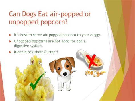 can dogs eat caramel ppt is popcorn safe for dogs powerpoint presentation id 7532556