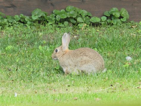 7 Facts On Bunny Rabbits by Picture 8 Of 9 Rabbit Oryctolagus Cuniculus Pictures