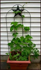 container gardening green beans just grow it serendipity is a garden