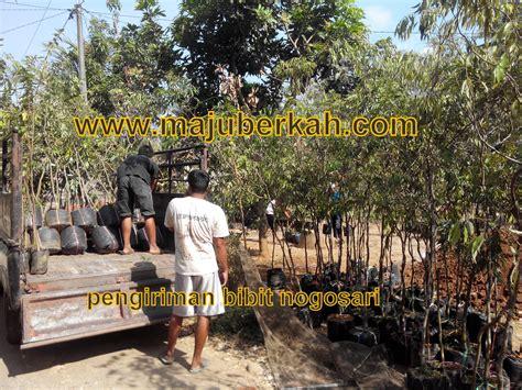 Cari Bibit Sengon Laut bukti pengiriman bibit tanaman ke beberapa daerah dari cv