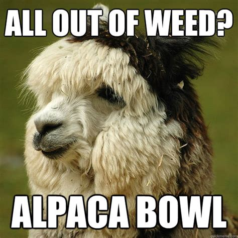 wanna smoke alpaca bowl alpaca quickmeme