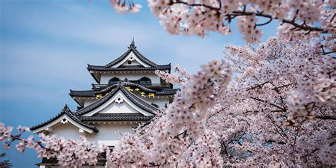 japanese best the best time to view japan s cherry blossoms