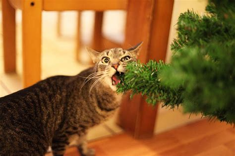 29 cats that really can t deal with christmas time
