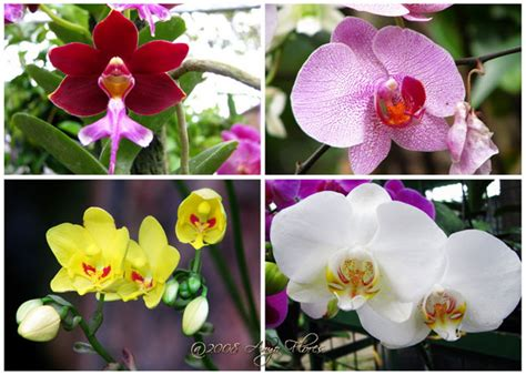 Rahasia Taman Bunga Serial Cantik flowers macam macam bunga