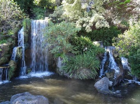 Los Angeles County Arboretum Botanic Garden Arcadia Ca by Arcadia Photos Featured Images Of Arcadia Ca Tripadvisor