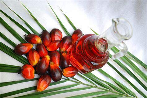 Eksport Minyak Kelapa Sawit minyak sawit 100 tahun mekar seiring pembangunan mynewshub