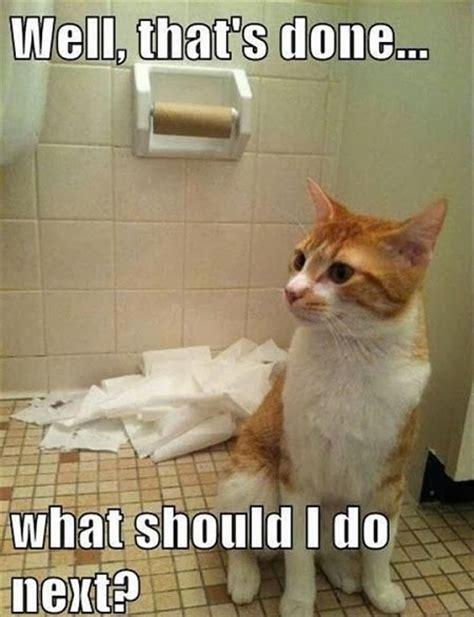 Funny Pet Memes - keepin babel at bay funny pet memes