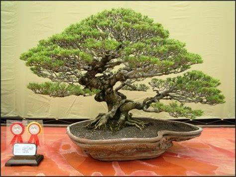 13578 best bonsai images on plants bonsai and