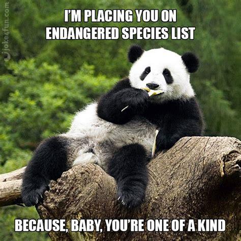 Pick Up Line Panda Meme - joke4fun memes panda pickup line
