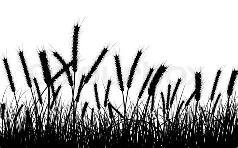 wheat  gras background  objects  separated