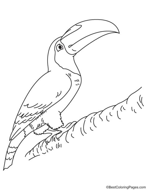 toco toucan coloring pages coloring pages