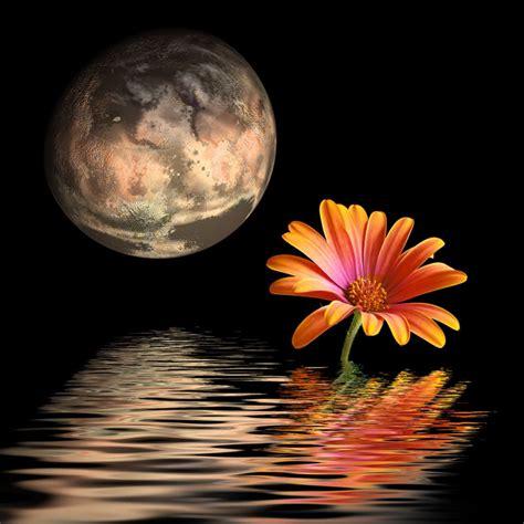 fiori di notte la di notte la pianta una poesia ed una leggenda