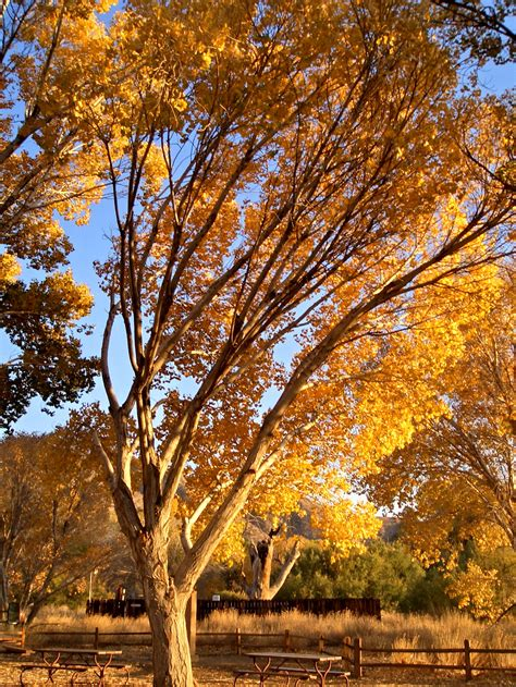 Trees Shed Leaves by Autumn Leaf Drop Is A Living Process The Power Of Plants