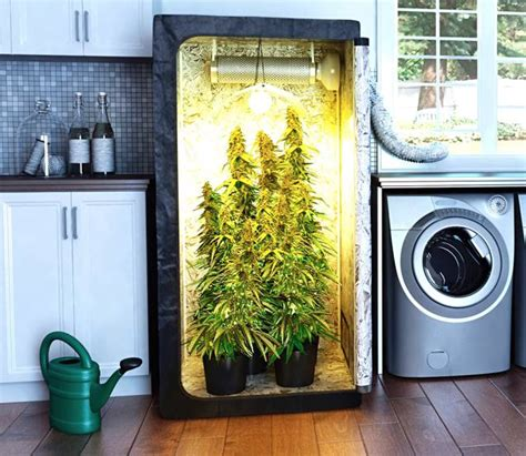 small plants to grow indoors some easy ways for growing marijuana indoors