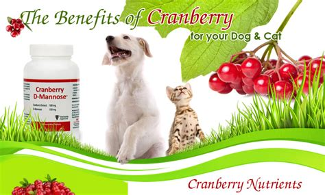 are cranberries for dogs cranberry benefits and products for your and cat