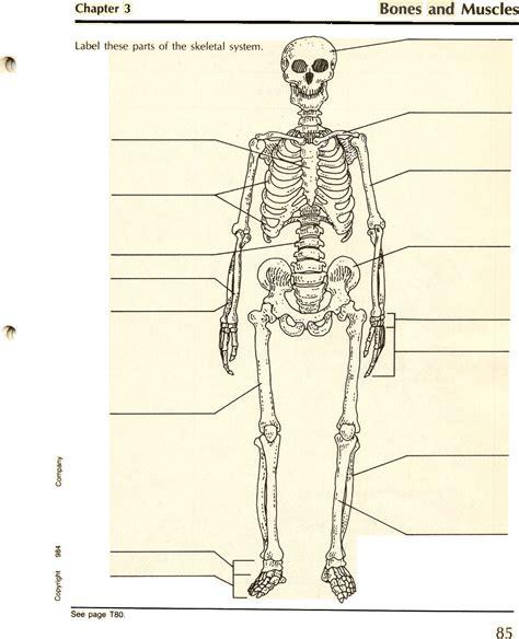 diagram of the skeletal system worksheet skeletal system skeleton diagram