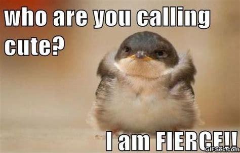 Cute Funny Memes - funny cute jpg
