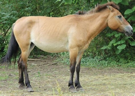 fjord jobs chicago are wild horses native to north america local