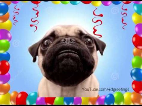 pug birthday song the pug song funnydog tv