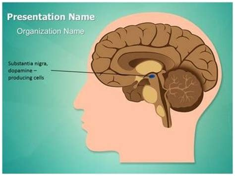 34 Best Images About Brain Powerpoint Templates Human Brain Powerpoint Template On Pinterest Parkinson S Disease Powerpoint Template