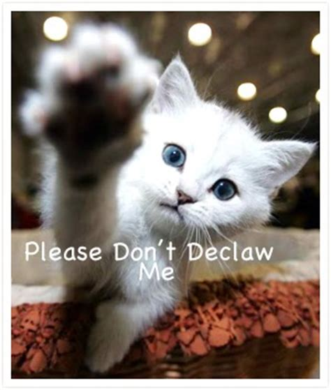 declawing puppies why are we still declawing cats in canada montreal