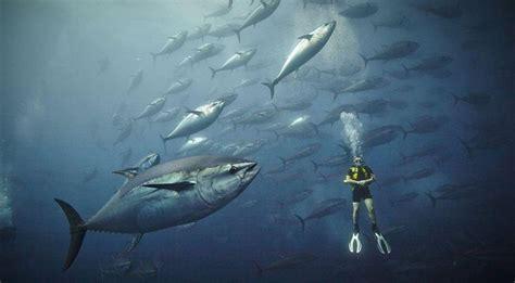 bajo el edredn spanish b00a58q9ru mundo bajo el mar spanish china org cn 中国最权威的西班牙语新闻网站