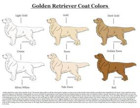 golden retriever colors golden retriever coat colors by xlunastarx on deviantart