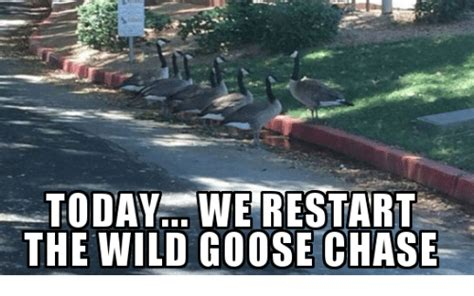 Chase Meme - 25 best memes about wild goose chase wild goose chase memes