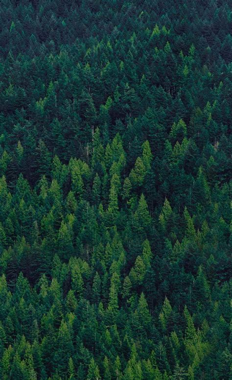 wallpaper iphone forest dense forest trees iphone wallpaper