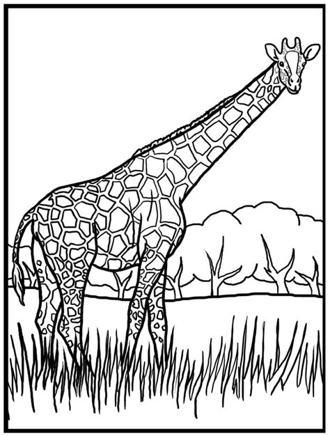 giraffe coloring page for adults coloring pages giraffe color pages gianfreda baby giraffe