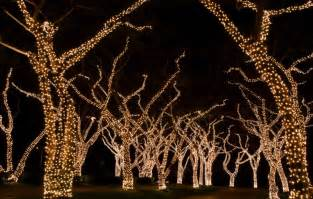 how to light your tree blue sky commercial decor tree lighting