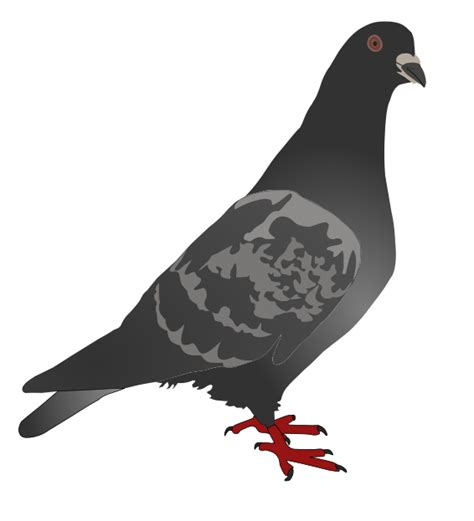 printable pigeon targets free to use public domain pigeon clip art