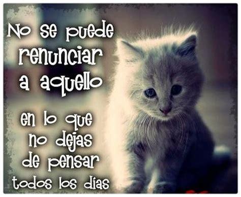 imagenes de gatos tristes con mensajes imagenes de gatos tiernos bebes con frases