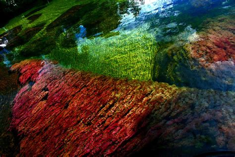 river colors rainbow colored algae ca 241 o cristales river holidaze