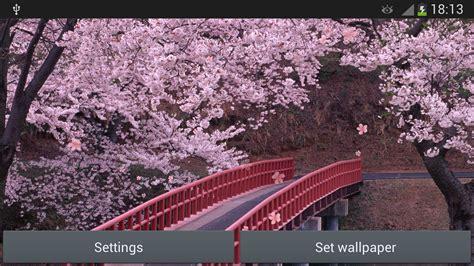 wallpaper live bunga sakura wallpaper desktop bunga sakura terlengkap a1 wallpaperz